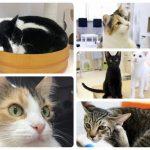 2017年8月23日 第3回 猫カフェ部 by 名古屋インスタ交流会