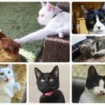 2018年6月6日 第8回 猫カフェ部 by 名古屋インスタ交流会